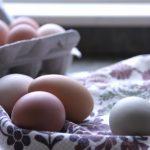 egg 卵 たまご