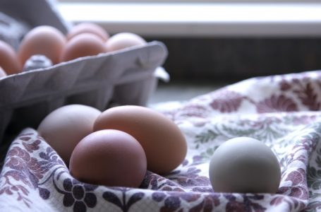 Grace Eggについて